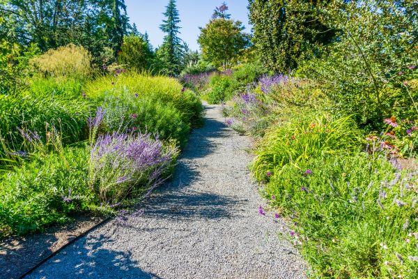 Pathway in Bellevue Botanical Garden