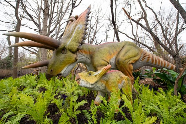 Woodland Park Zoo Dinosaur Discovery exhibit - Pentaceratops and baby