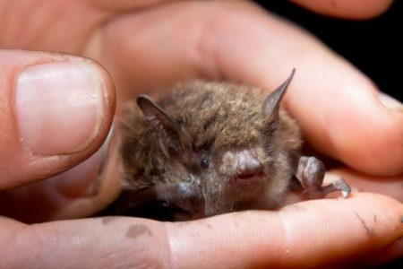someone holding a small brown bat in their hand