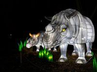 Woodland Park Zoo WildLanterns rhinos